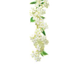 Elderflower syrup 1L