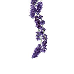 Lavender syrup 1L
